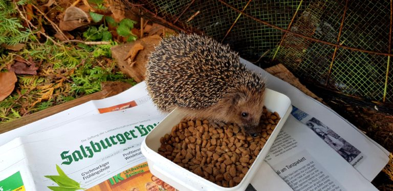 Read more about the article Raus aus dem Winterschlaf und Igeln helfen