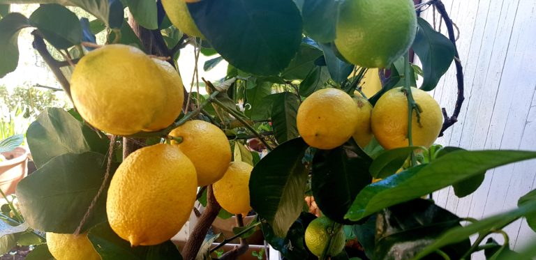 Read more about the article Limoncello Deodorant – dein selbst gemachtes Ostergeschenk